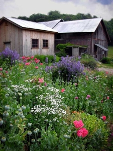 Fine Art Photograpy - Barn Garden